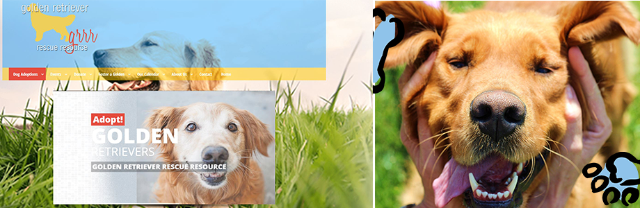 Golden Retriever Rescue Resource website